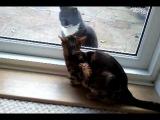 Котики воркуют, настоящая любовь! Животные живут инстинктами но зато они честны по отношению к себе и окружающим